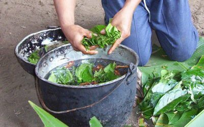 Call for participants : Voice-hearing experiences among ayahuasca users
